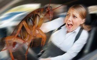 Все о боязни тараканов