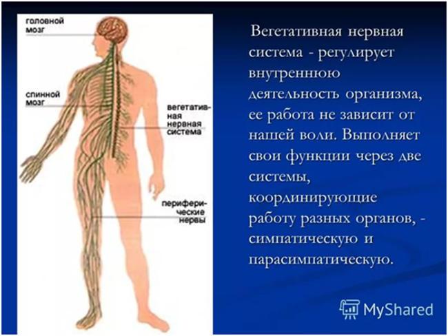 Женские болезни по гинекологии список