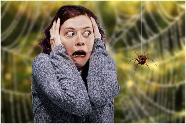 девушка боится пауков
