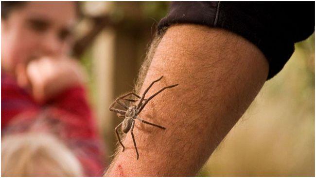 рука с пауком