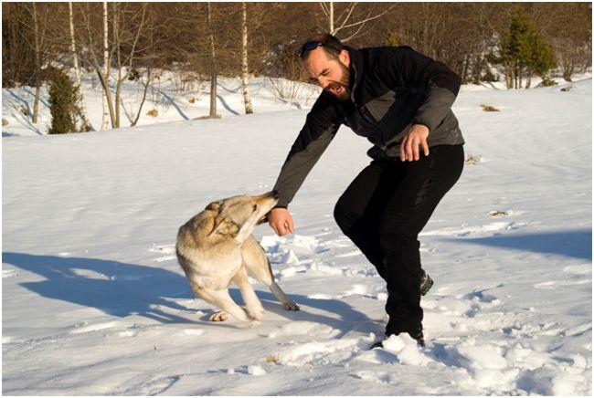 нападение собаки на человека