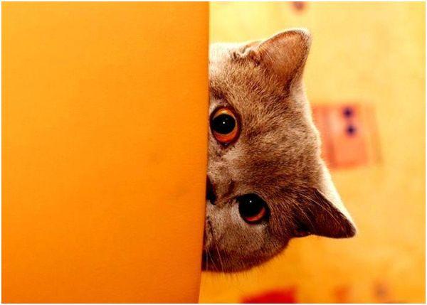 кот, выглядывающий из-за угла