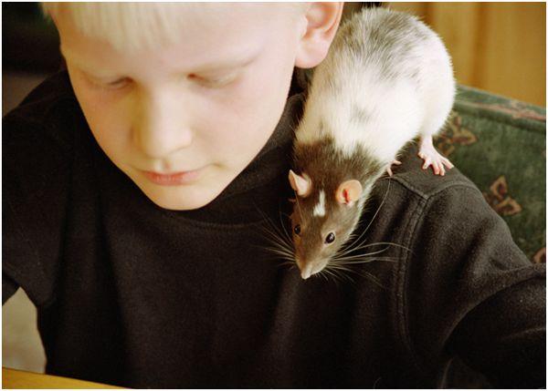 мальчик с крысой