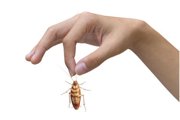 человек держит таракана за усики