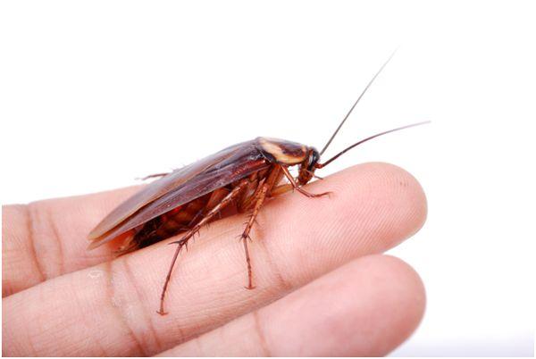 таракан на пальцах