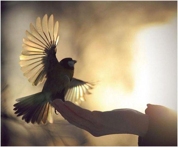 красивое фото птички